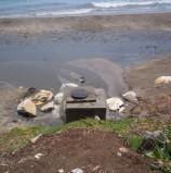 Vertidos fecales en la playa Rosa de los Vientos